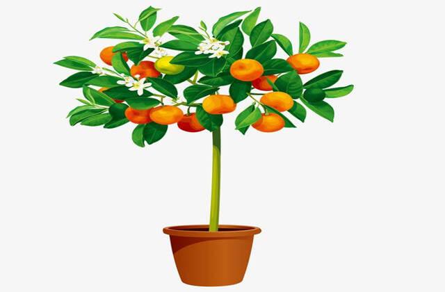 家里客厅种什么植物催财