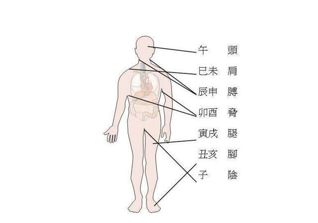 最全的八字干支与人体器官象义