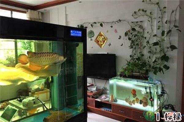 家里养鱼要注意哪些问题