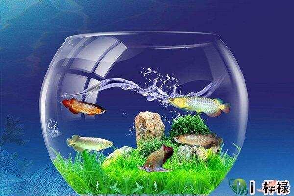 家里养鱼要注意哪些问题 第2张