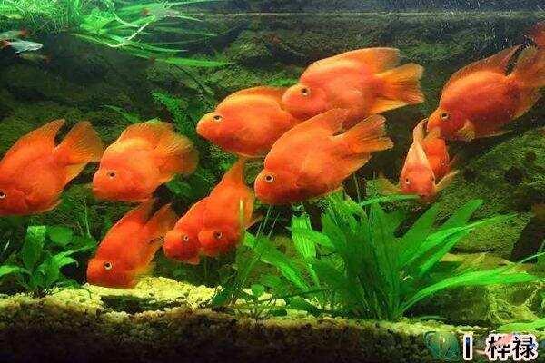 家里养鱼要注意哪些问题 第3张
