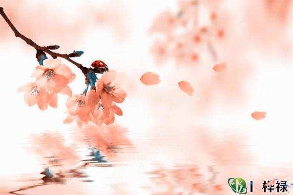 民间招桃花很灵的老方法,风水招桃花常用方法