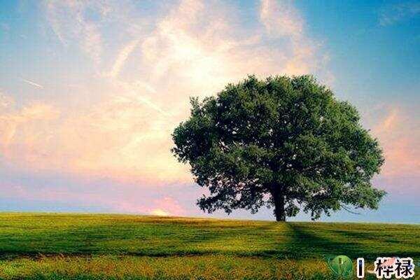 命中缺木怎么补  第3张