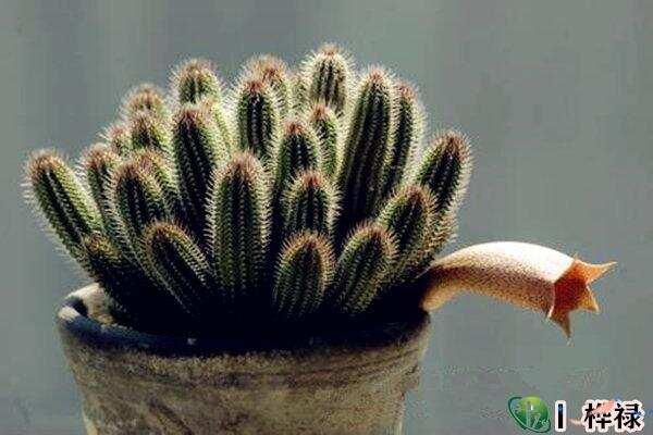 什么样的八字种植物对自己好