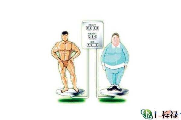哪种八字的人胖点运势好