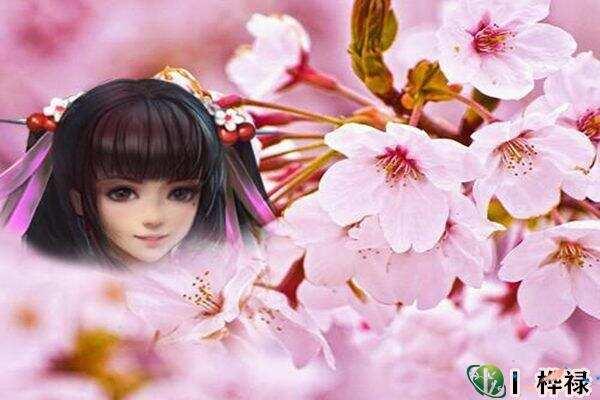红艳桃花查询,红艳和桃花的区别