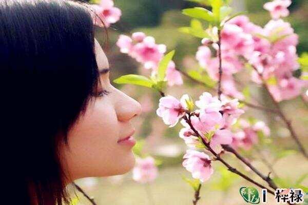 红艳桃花查询,红艳和桃花的区别  第3张