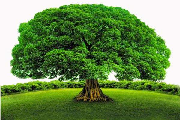 最全的五行木详解  第3张
