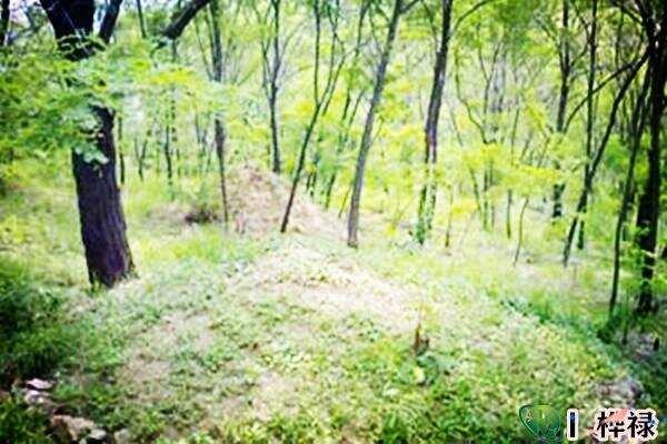 八字看坟山的方位方法  第2张