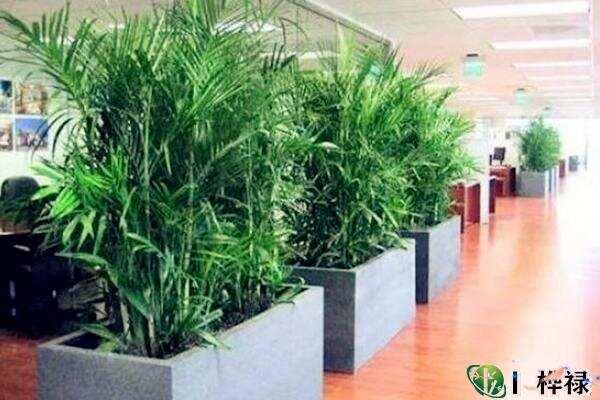 办公室摆放绿植风水  第2张