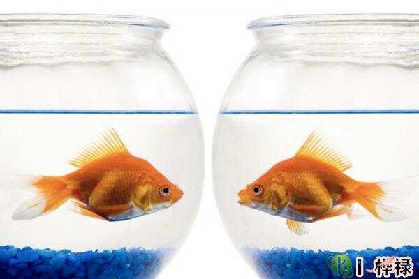 家中养鱼风水注意事项  第1张