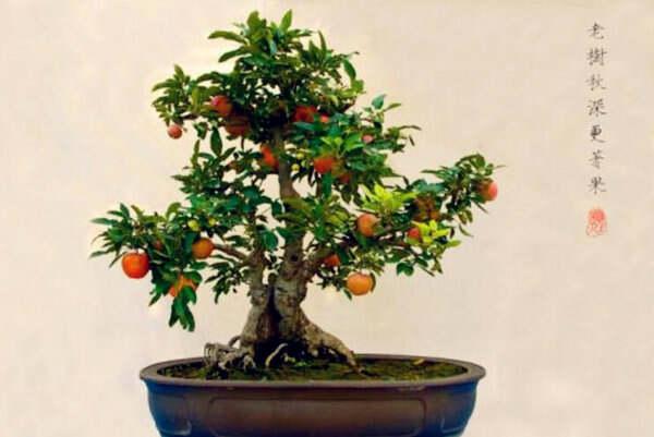 适合家里种植的盆栽有哪些  第2张