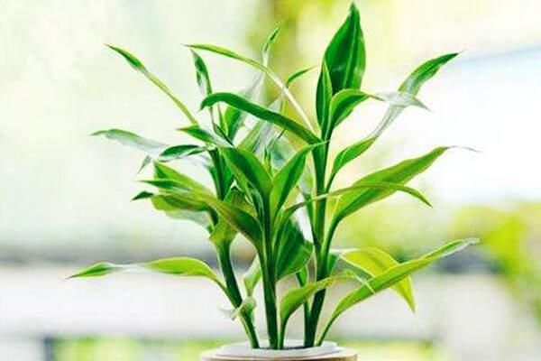 适合家里种植的盆栽有哪些  第3张