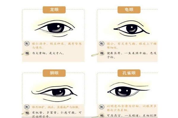 面相学眼睛有哪些分类 第2张
