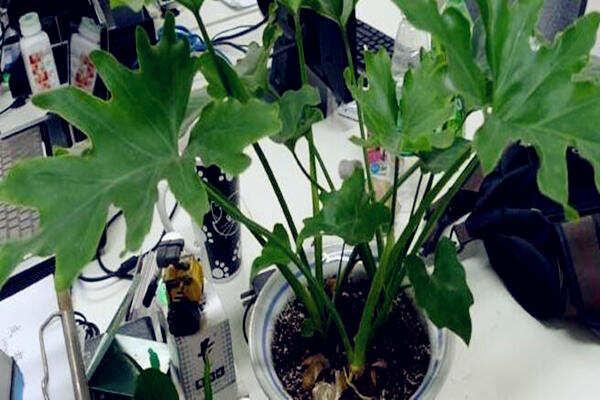 办公室养植物风水禁忌  第2张