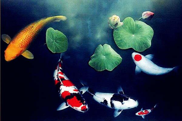 风水中鲤鱼图有什么寓意