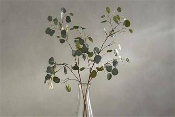 植物阴阳风水知识  第3张