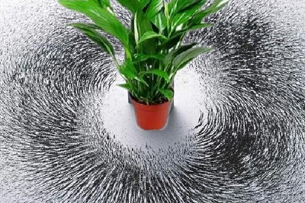 植物风水提升气场