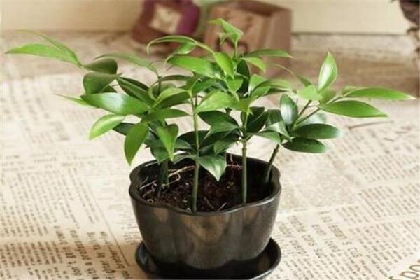 植物风水提升气场  第3张