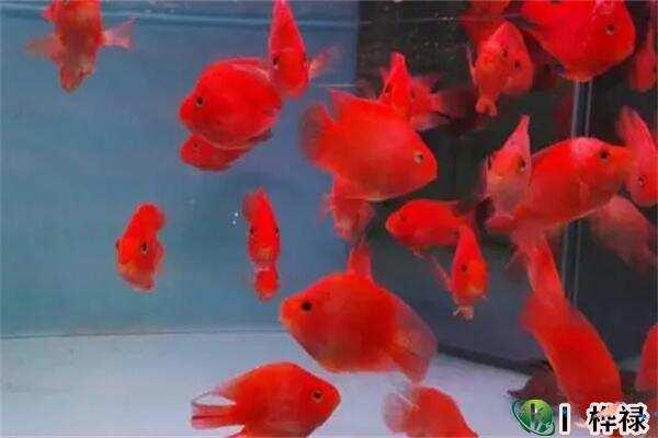 养鱼的数量风水讲究