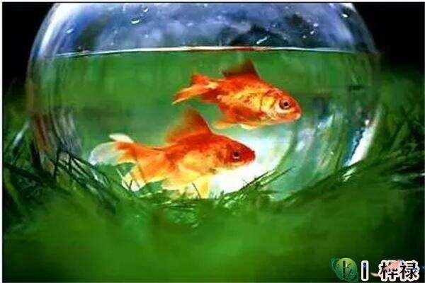 家里养鱼有何风水讲究