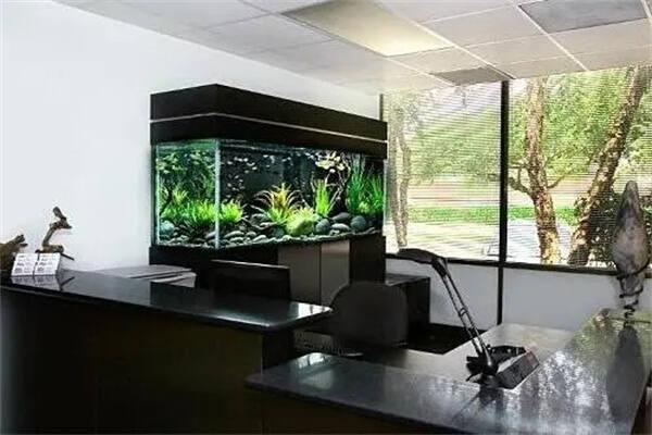 办公室鱼缸的选择风水