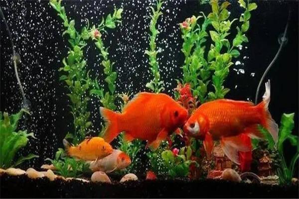 养什么不同颜色的鱼招财