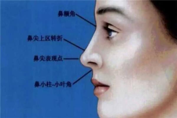 鼻子尖的人性格特征